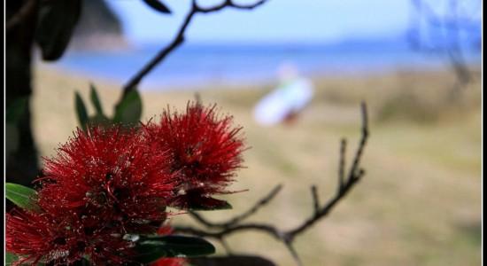 Kiwi Xmas Tree